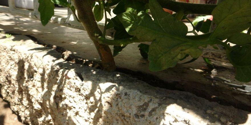 Adana'da 'Bismillah' diyerek betonu delen domates görenleri şaşırtıyor
