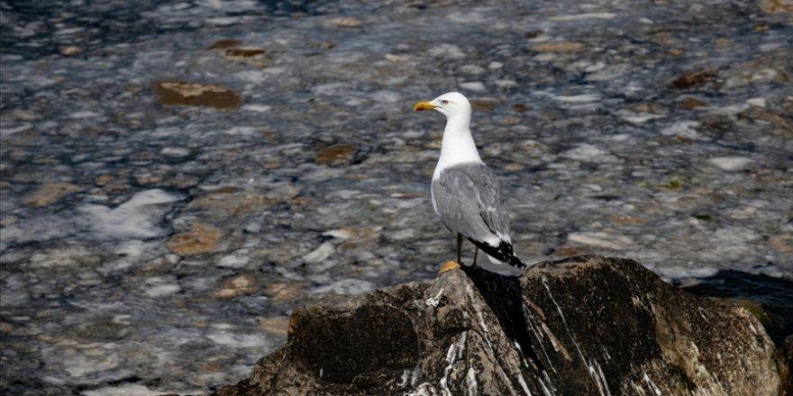 Marmara Denizi'nde balık ağlarının gözleri Müsilaj nedeniyle kapanmış durumda