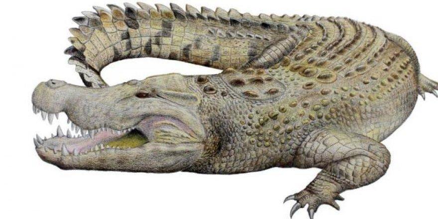Nesli tükenmiş yeni bir timsah türü keşfedildi