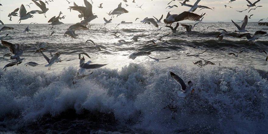 Marmara Denizi'nde 'İklim değişikliği mücadele planı geliştirilmeli' önerisi