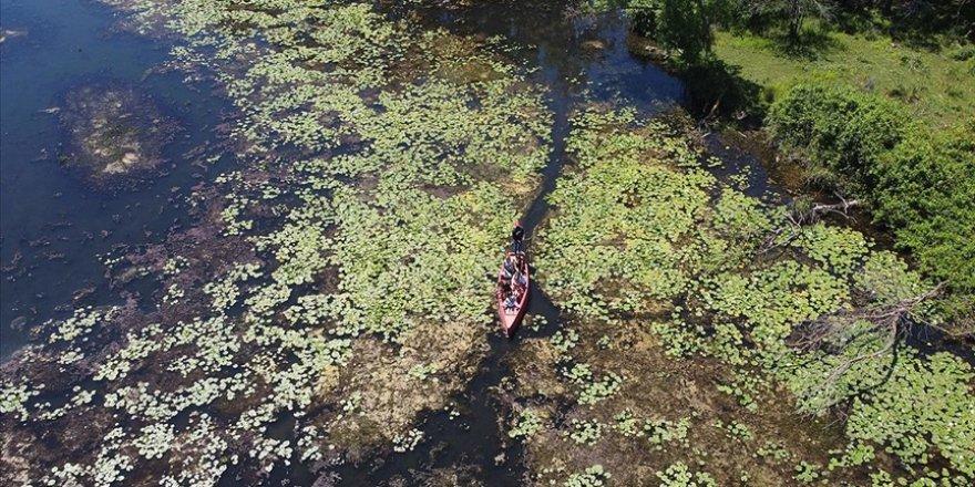 Yeşilin binbir tonunun suya karıştığı güzellik: Karacabey Longozu