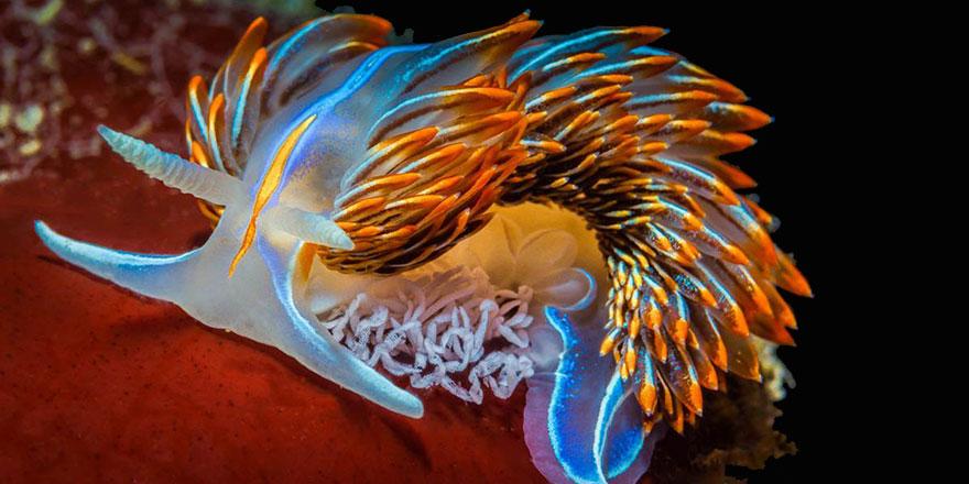 Subhanallah! Deniz altındaki muhteşem sanat
