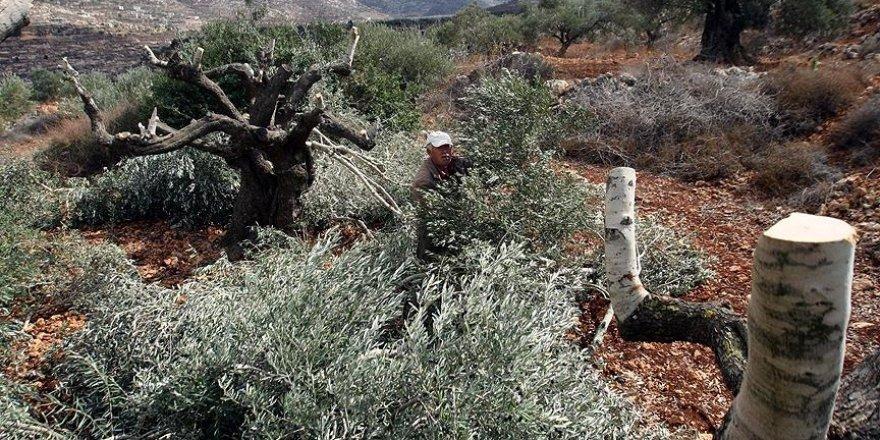 Yahudi yerleşimciler zeytin toplayan Filistinlilere saldırdı, bir aracı ateşe verdi
