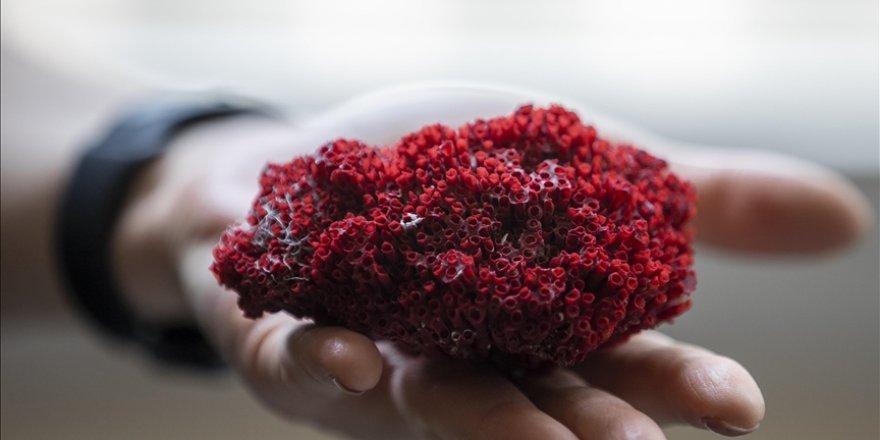 Aktarlarda satılan 'kardeş kanı' bitkisi, hayati tehlike oluşturuyor