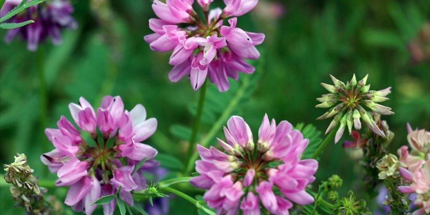Ağrı'da doğada renk cümbüşü oluşturan çiçekler fotoğraf tutkunlarının ilgisini çekiyor