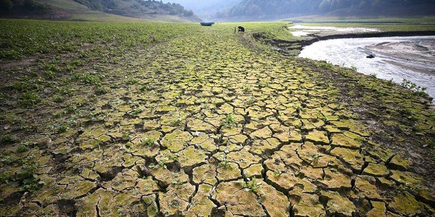 Kanada'da aşırı sıcaklarla gelen kuraklık tarımsal afete neden oldu