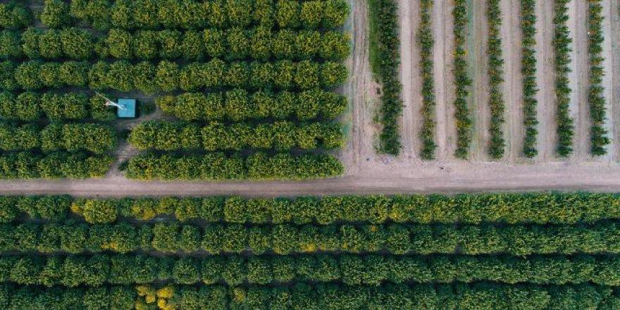 Çiftçi Kayıt Sistemi'ne başvurular 30 Haziran'da sona eriyor
