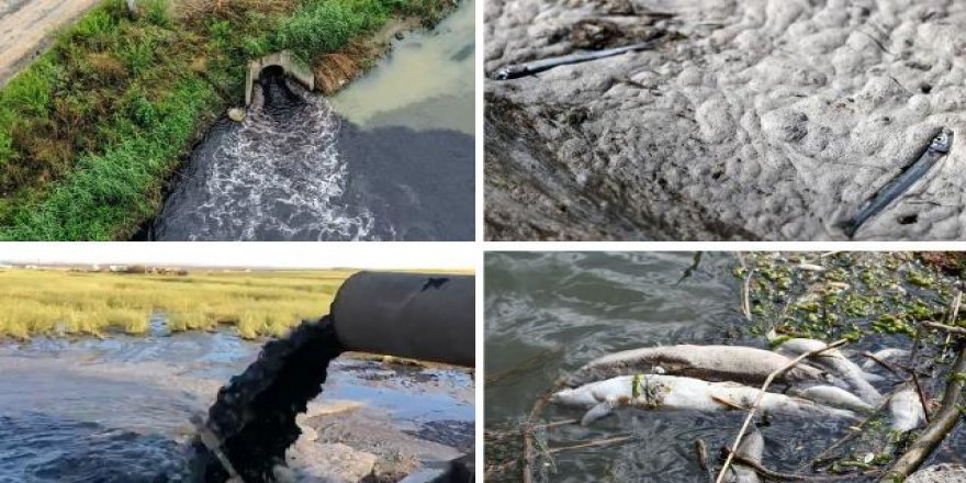 Endüstriyel, evsel ve tarımsal atıklar suyun oksijen seviyesini düşürüyor