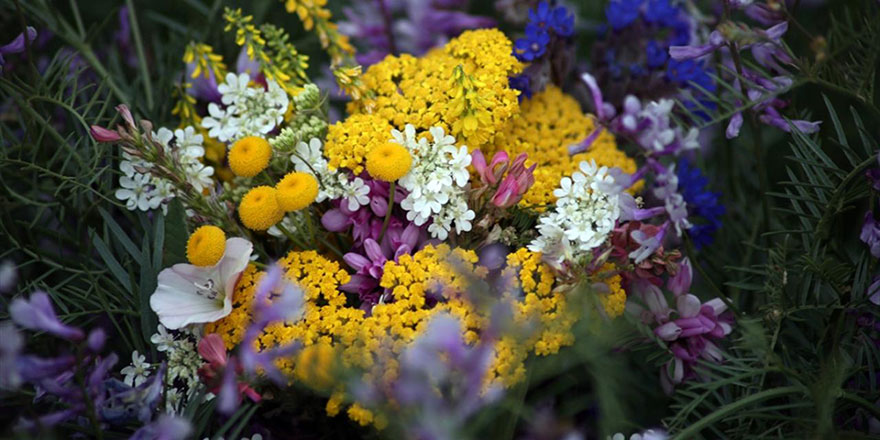 Karlar eriyince rengarenk çiçekler açtı