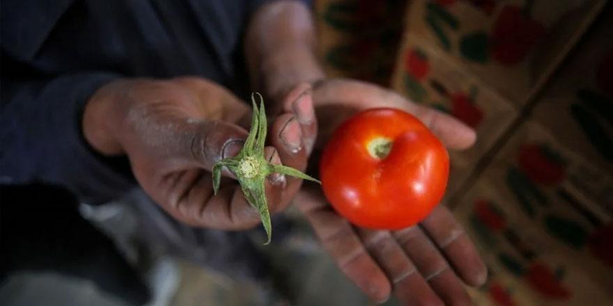 İşgalci İsrail, Gazze domatesinin sapını da tehdit gördü