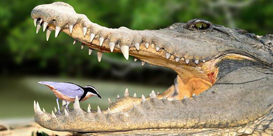 Hayvanlar hakkında az bilinen yardımlaşma örnekleri