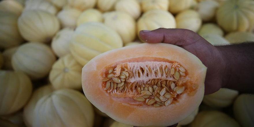 Ata tohumundan üretiliyor! Türkiye'nin dört bir yanına gönderiliyor