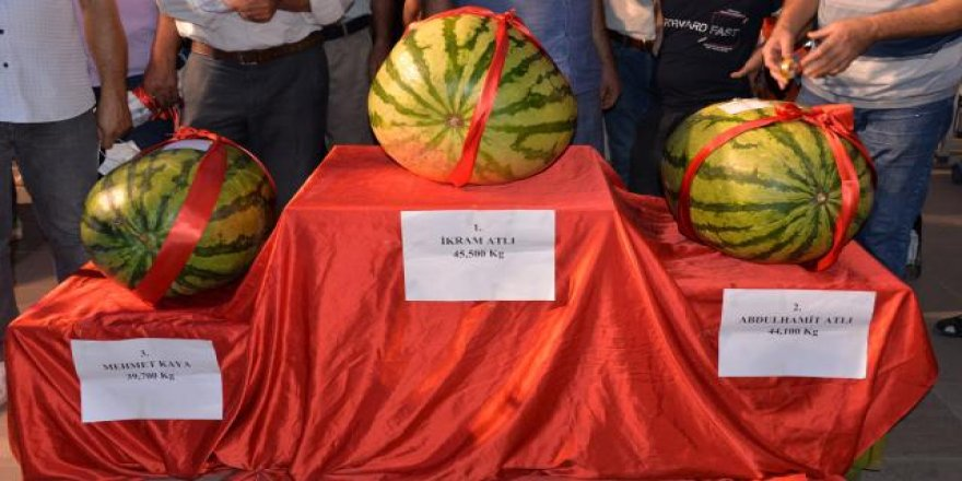 Festival şampiyonu 45,5 kiloluk karpuz oldu