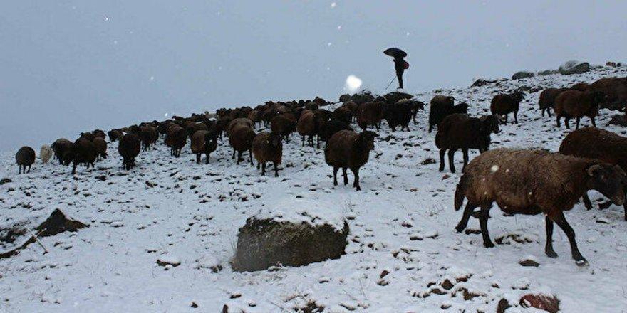 Koyun sürüsü kar ve tipiye yakalandı