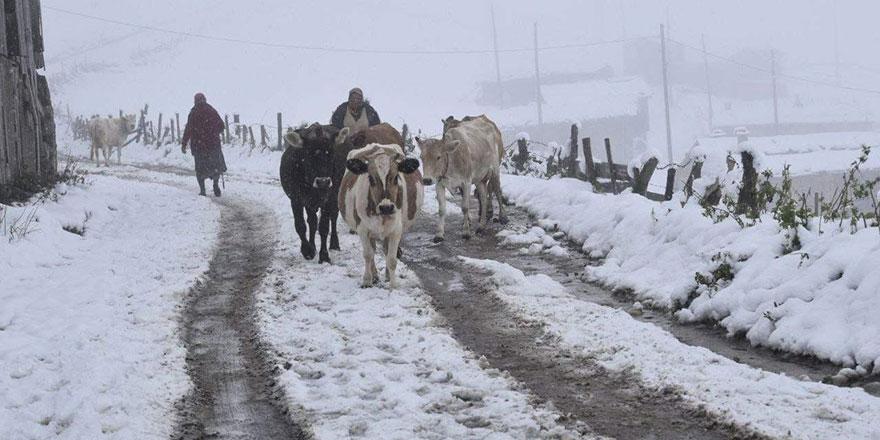 Trabzon'un yüksek kesimlerinde kar kalınlığı 30 santimetreyi buldu