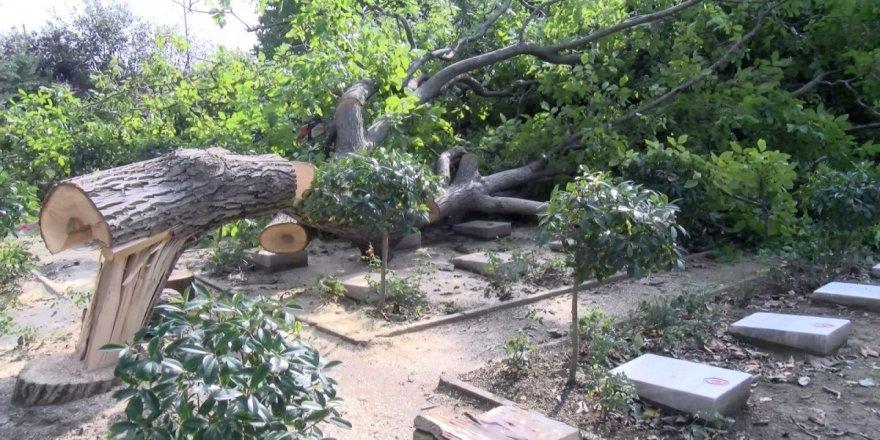 Edirnekapı Şehitliği'ndeki ağaç kesimi tepki topladı