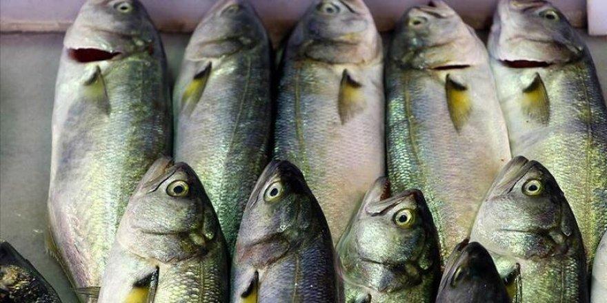 Lüfer bereketi balıkçıların yüzünü güldürdü
