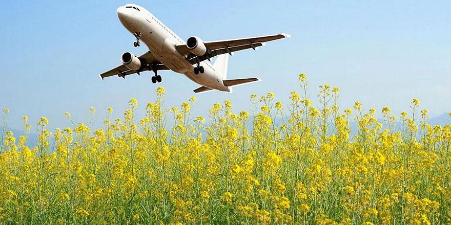 'Hardal bitkisi'nden uçak yakıtı üretildi, karbon salımını yüzde 70 azaltacak