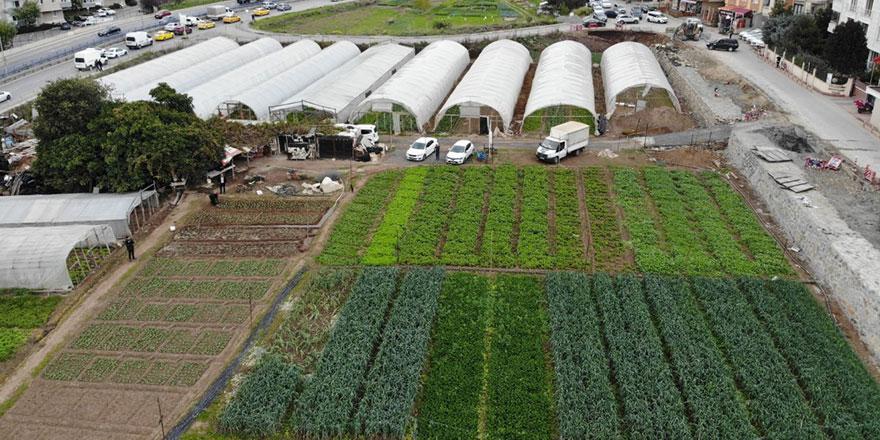 İstanbul'un göbeğinde 6 dönümlük organik tarım alanı havadan görüntülendi