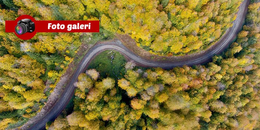 Düzce'nin ormanlarında sonbahar: Sanat Sanatkarını hatırlatır