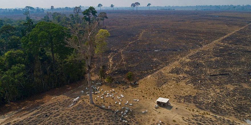Faizle ifsat eden bankalar ormanları yok eden firmalara milyarlarca euro kredi sağladı