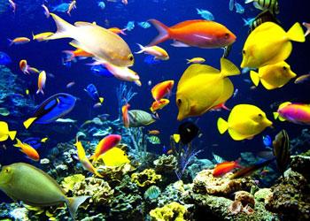 Akvaryum balıklarına canlı yem verme caiz midir?