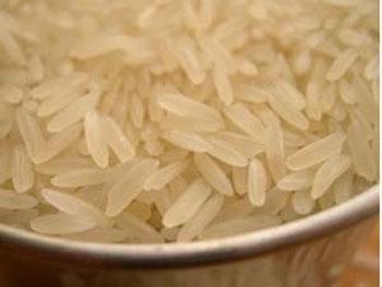 Tehlike tüm pirinç çeşitlerinde