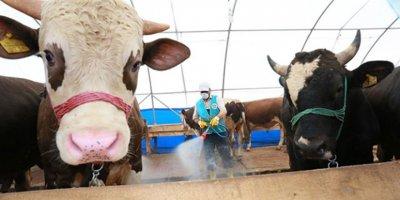Kurban edilmesi dinen sakıncalı olan hayvanlar