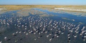 Tuz Gölü'ndeki flamingolar tefekkürlük görüntüler ortaya çıkarıyor
