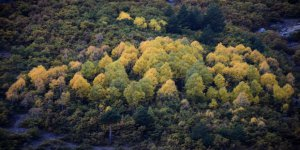 Sonbahar geldi, Gümüşhane'de tefekkürlük manzaralar oluştu