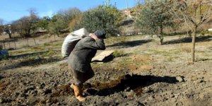 91 yaşında olmasına rağmen çiftçilikten vazgeçmedi