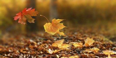 Sonbaharda yapraklar neden sararır ve dökülür?