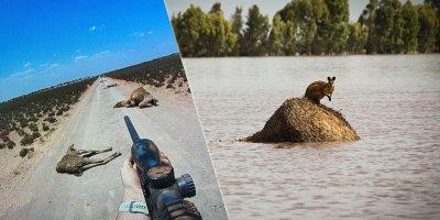 Develeri 'çok su içiyorlar' diye öldüren Avustralya'ya yüzyılda bir görülen yağmur yağdırıldı