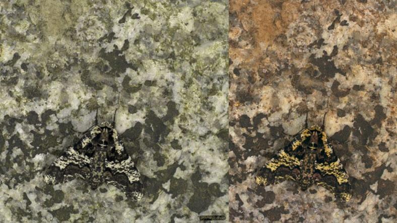 moth_001.jpg